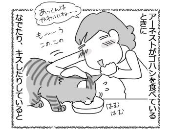 13042017_cat1.jpg