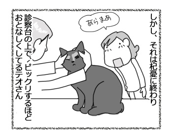 14022017_cat3.jpg