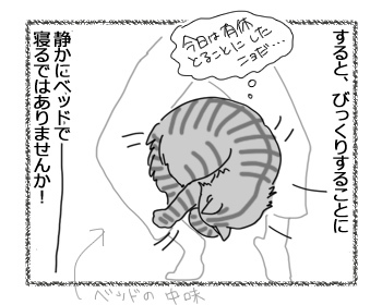 15032017_cat2.jpg