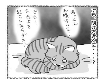 15032017_cat3.jpg