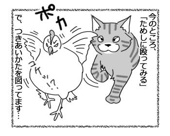 15042017_cat3.jpg