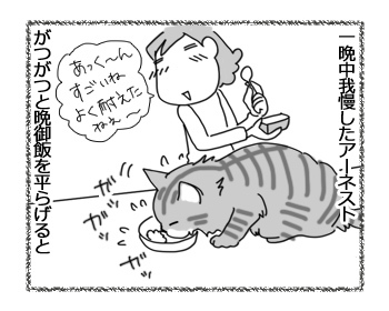 16032017_cat1.jpg