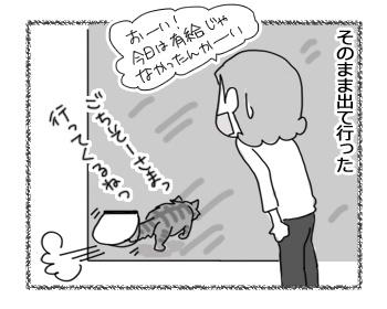 16032017_cat2.jpg