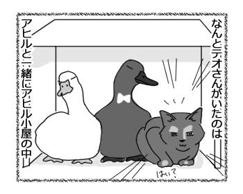 17022017_cat3.jpg