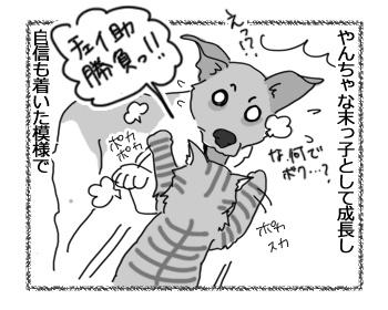 17032017_cat3.jpg