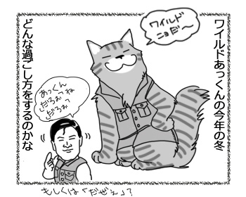 17032017_cat4.jpg