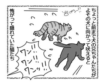 18042017_cat1.jpg