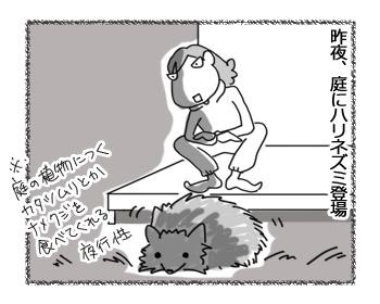19042017_cat1.jpg