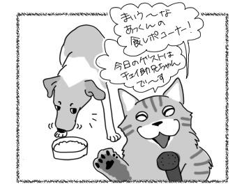 21022017_cat1.jpg