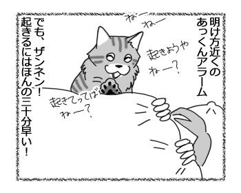 22032017_cat1.jpg