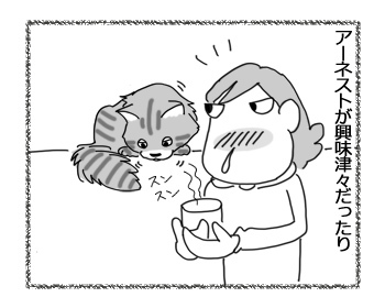 23032017_cat2.jpg