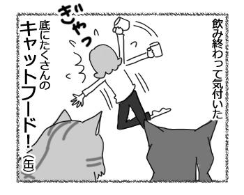 23032017_cat4.jpg