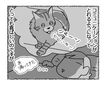 24022017_cat3.jpg