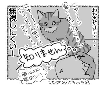 24022017_cat4.jpg