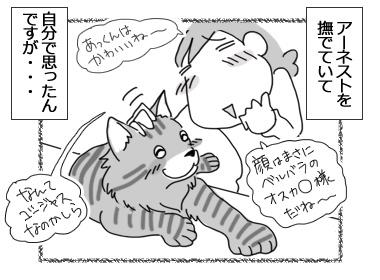 26022017_cat1.jpg