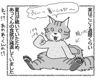 27022017_cat1.jpg