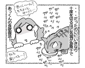 27022017_cat2.jpg
