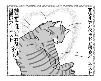 27032017_cat1.jpg