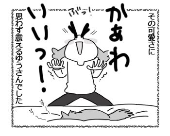 27032017_cat3.jpg