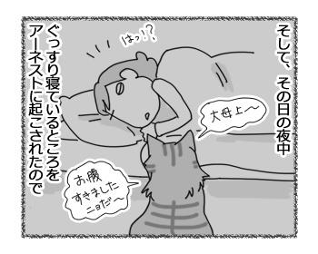 27032017_cat4.jpg