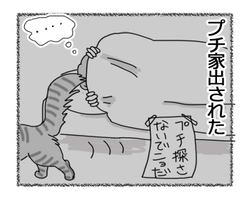 27032017_cat6.jpg