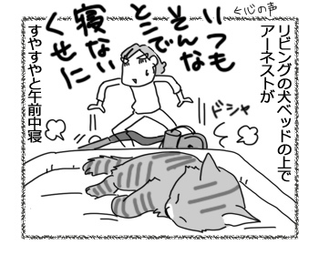 28022017_cat4.jpg