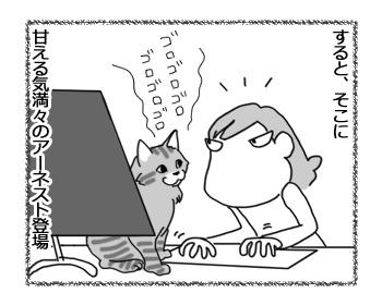 28032017_cat2.jpg