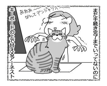 28032017_cat3.jpg
