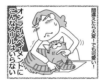 28032017_cat4.jpg