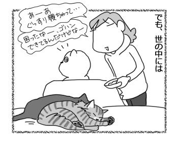 29032017_cat3.jpg