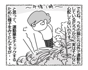 30032017_cat2.jpg