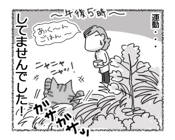 30032017_cat6.jpg