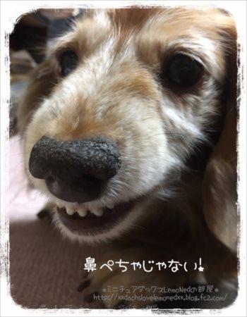 鼻ぺちゃ1