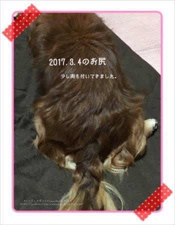 2017/03/04のお尻