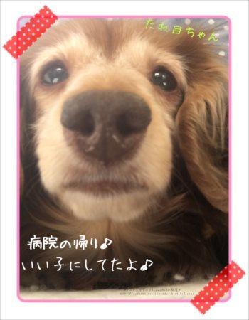 2017/03/09 帰り