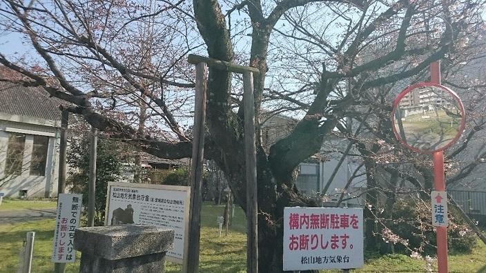 20170404桜情報