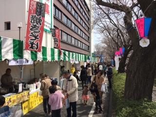 三沢川桜2