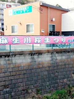 麻生川の桜並木_001