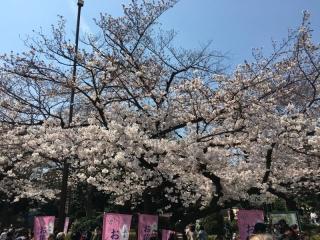 2017上野動物園_006_1
