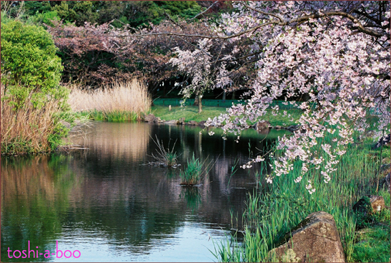 bloghotorinoshi.jpg