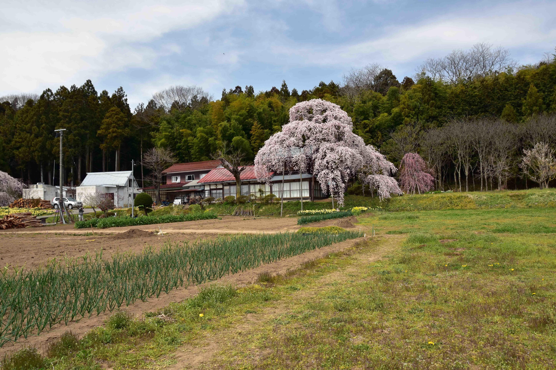 横田陣屋跡