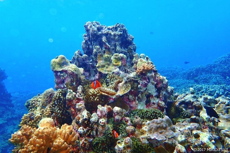 絶景探しの旅 - 0159 色鮮やか 七色の珊瑚礁 (中の島ビーチ / 沖縄県 宮古島市 下地島)
