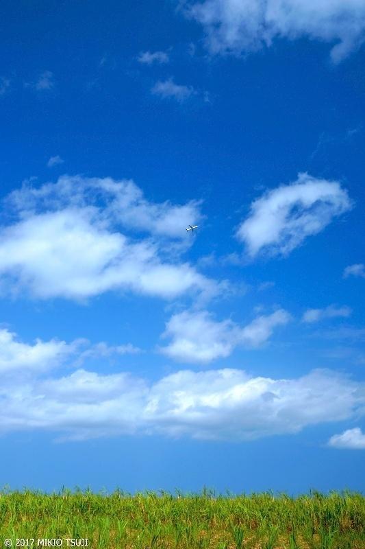 絶景探しの旅 - 0167 さとうきび畑と青い空 (沖縄県 宮古島市)
