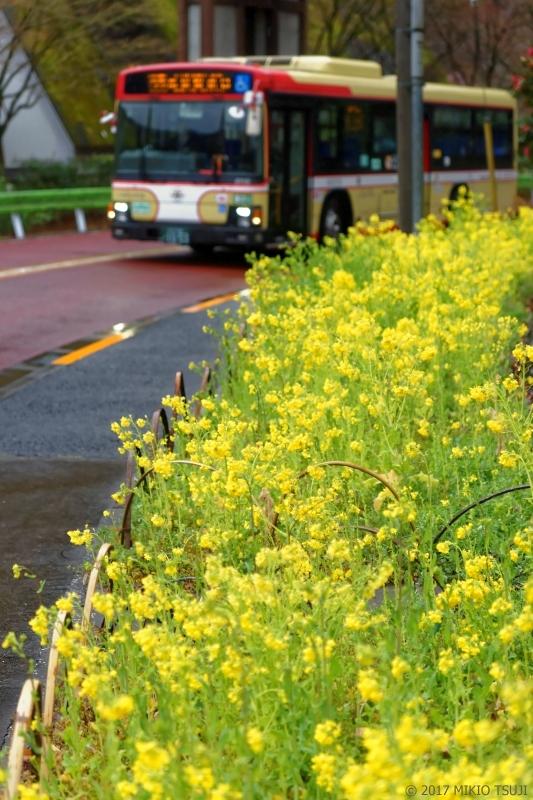 絶景探しの旅 - 0170 春の冷たい雨降る菜の花の山里 (東京都 八王子市)
