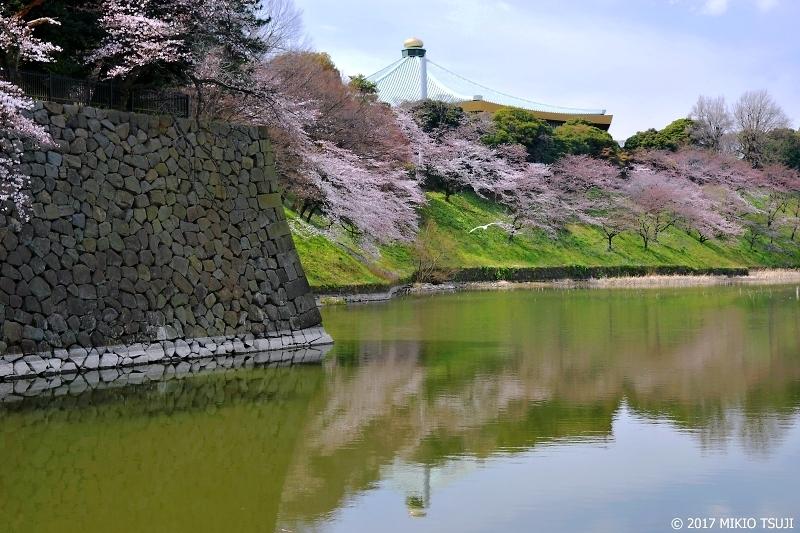 絶景探しの旅 - 0176 大きな玉ねぎの下で 咲き誇る満開の桜 (九段下/東京都 千代田区)